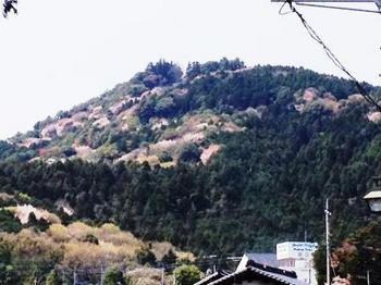 愛宕山.jpg